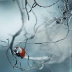 macro-photography1