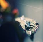 macro-photography15