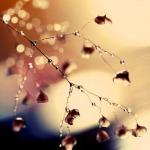 macro-photography7