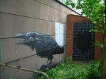 Animal_Graffiti_12